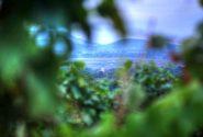 Panorama-a-fak-kozul