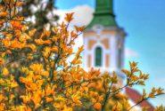 Templom-narancsviraggal
